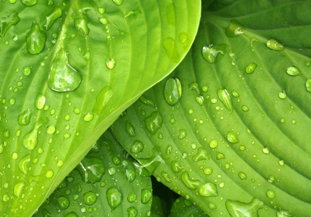 Vihreän värin ominaisuudet